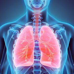 Обстеження: УЗД легень
